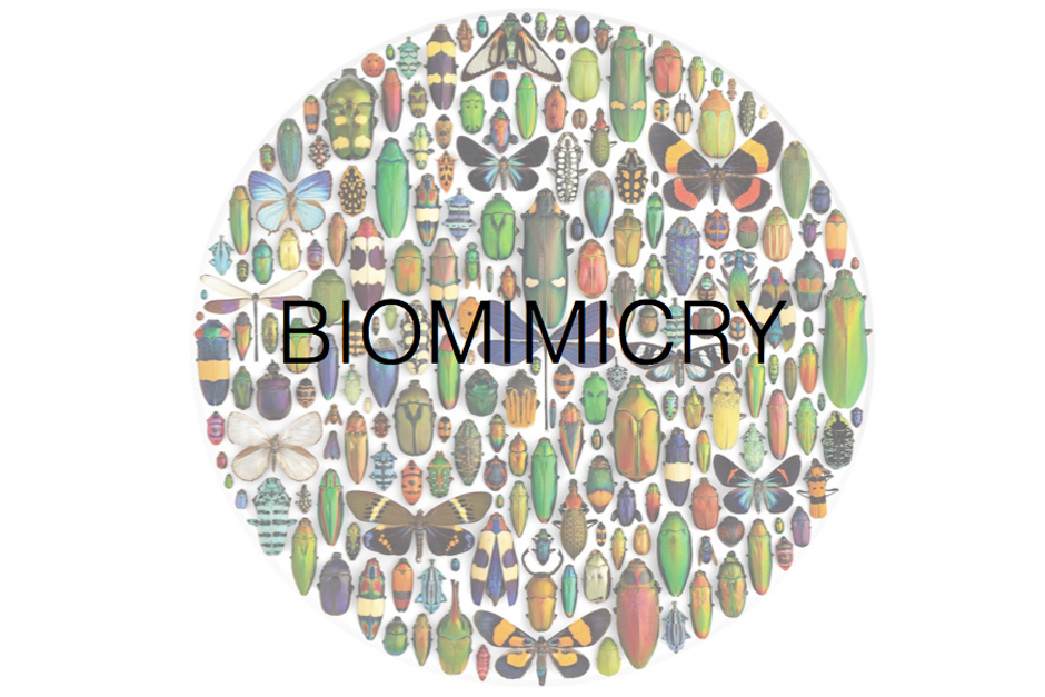 Biomimicry Workshop